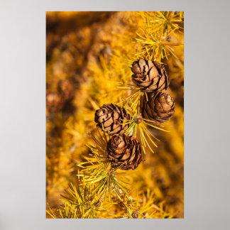 カラマツ木の円錐形 ポスター