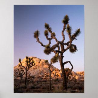 カリフォルニアのジョシュアツリーの国立公園、ジョシュア ポスター