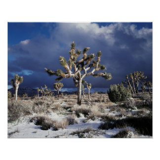 カリフォルニアのジョシュアツリーの国立公園 ポスター