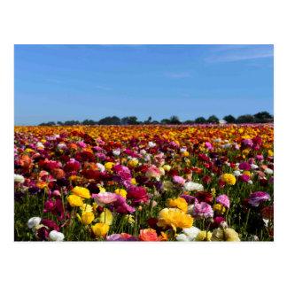 カリフォルニアの花分野 ポストカード