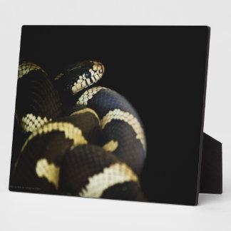 カリフォルニアキングヘビ属プラク フォトプラーク