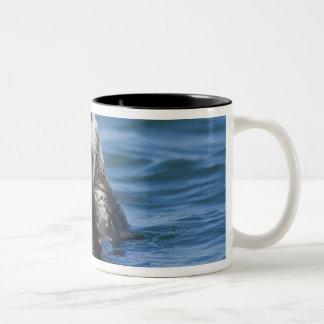 カリフォルニアラッコのEnhydraのlutrisの)新郎 ツートーンマグカップ