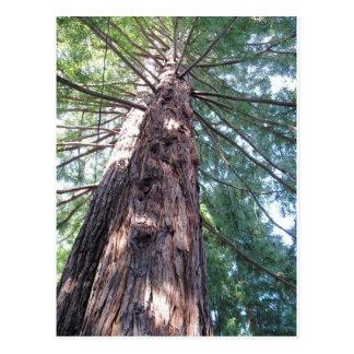 カリフォルニアレッドウッドの結末 ポストカード