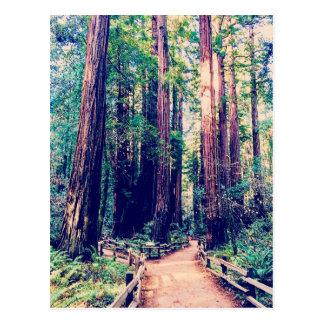 カリフォルニアレッドウッド ポストカード