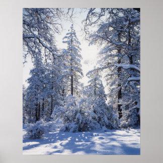 カリフォルニア、クリーブランド国有林、ラグナ1 ポスター