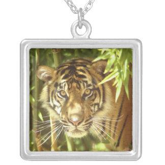 カリフォルニア、サンフランシスコ動物園、Sumatranのトラ シルバープレートネックレス