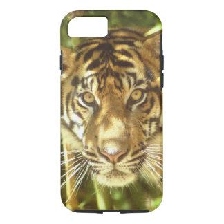 カリフォルニア、サンフランシスコ動物園、Sumatranのトラ iPhone 8/7ケース