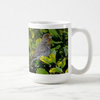 カリフォルニアTowhee コーヒーマグカップ