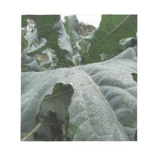 カリフラワーの葉の雨滴 ノートパッド