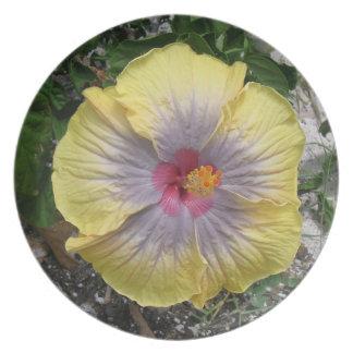 カリブので黄色い接吻されたハイビスカスの花 プレート