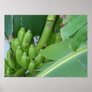 カリブのなバナナ ポスター
