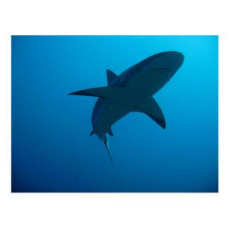 カリブのな礁の鮫 ポストカード