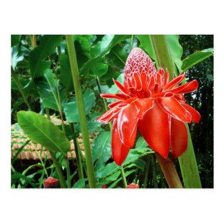 カリブの赤いバラのエキゾチックな花 ポストカード