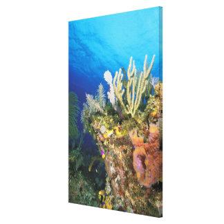カリブ。 礁 キャンバスプリント