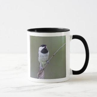 カロライナ《鳥》アメリカゴガラの歌うこと マグカップ