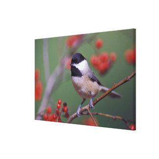 カロライナ《鳥》アメリカゴガラ キャンバスプリント