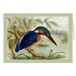 カワセミのヴィンテージの鳥のイラストレーション カード