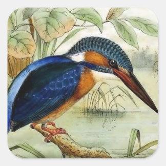 カワセミのヴィンテージの鳥のイラストレーション スクエアシール