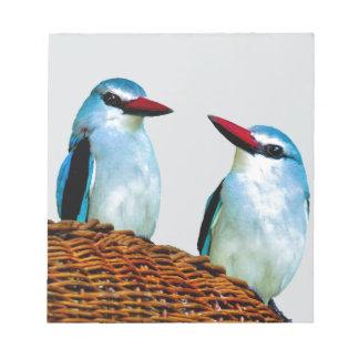 カワセミの鳥南アフリカ共和国 ノートパッド