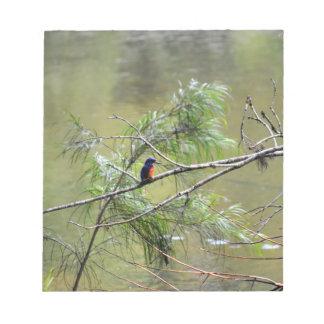 カワセミEUNGELLAの国立公園オーストラリア ノートパッド