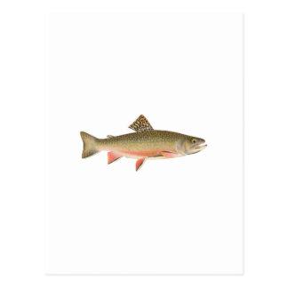 カワマスの芸術 ポストカード