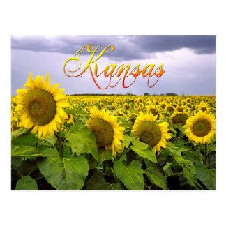 カンザスの州花-ヒマワリ ポストカード