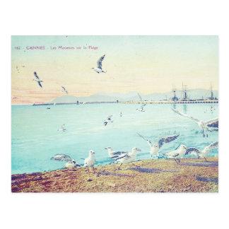 カンヌビーチのカモメ ポストカード