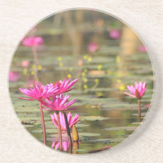 カンボジアのピンクの《植物》スイレン コースター