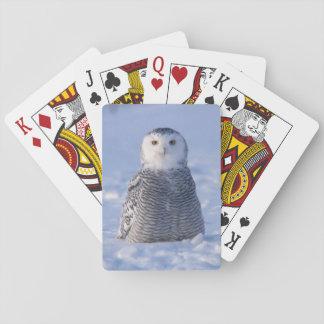 カードを遊ぶ北極Snowyのフクロウのアラスカの冬場面 トランプ