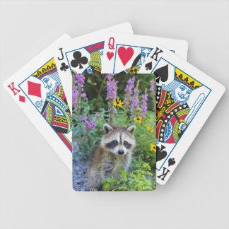 カードを遊んでいるアライグマ バイスクルトランプ