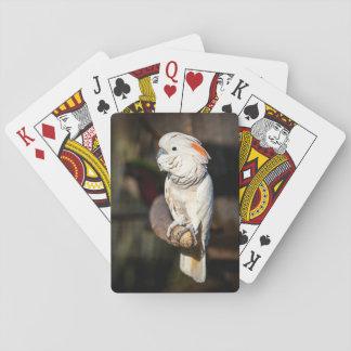 カードを遊んでいるMoluccanオカメインコ トランプ