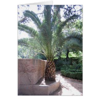 カード: アルハンブラ宮殿の庭のヤシの木 カード