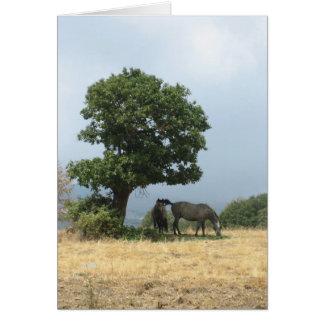 カード: 馬、グラナダ、アンダルーシア、スペイン カード