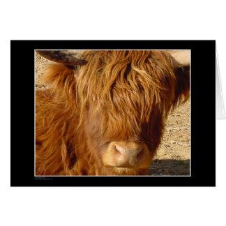 カード-高地の牛 カード