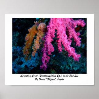 カーネーションの珊瑚のプリント ポスター