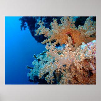 カーネーションの珊瑚ポスター ポスター