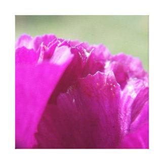 カーネーションの花びら キャンバスプリント