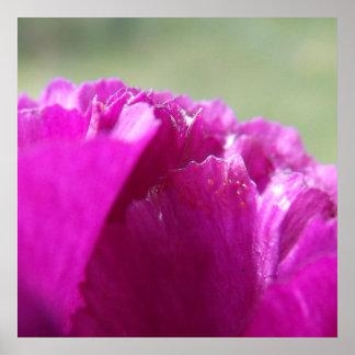 カーネーションの花びら ポスター