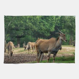 ガゼル、野生動物の動物園、羚。 キッチンタオル