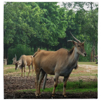 ガゼル、野生動物の動物園、羚。 ナプキンクロス