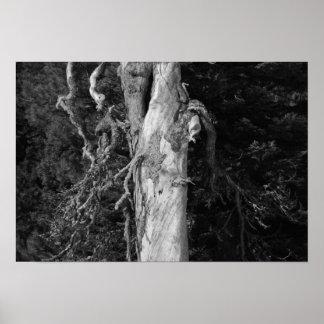 ガチョウの草原の木 ポスター