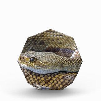 ガラガラヘビの写真 表彰盾