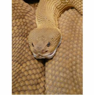 ガラガラヘビの頭部 フォトスカルプチャー