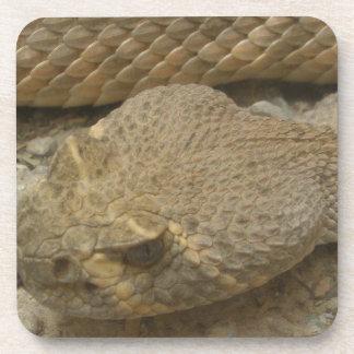 ガラガラヘビ コースター