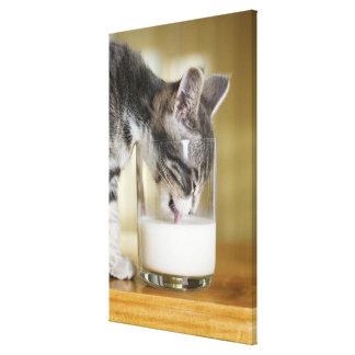 ガラスからの子ネコの牛乳 キャンバスプリント