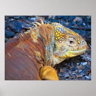 ガラパゴスのイグアナのプリント ポスター
