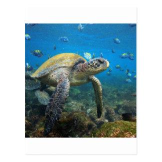 ガラパゴスの水中楽園を泳いでいるウミガメ ポストカード