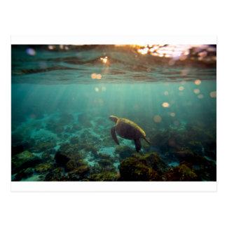 ガラパゴスの水中緑の礁湖のウミガメ ポストカード
