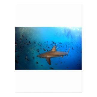 ガラパゴス礁の鮫 ポストカード