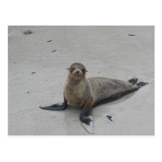 ガラパゴス諸島のアシカ!! ポストカード